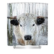 White Park Cattle In The Snow Shower Curtain