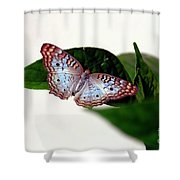 White Peacock Butterfly 2 Shower Curtain