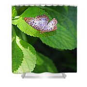 White Peacock Butterfly II Shower Curtain