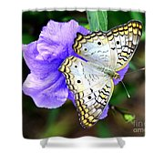 White Peacock Butterfly On Purple 2 Shower Curtain