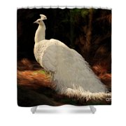 White Peacock In Golden Hour Shower Curtain
