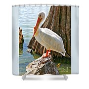 White Pelican By Cypress Tree Shower Curtain