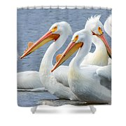 White Pelicans At Nelson Lake Shower Curtain
