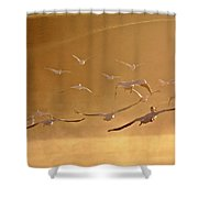 White Pelicans Flying Through Morning Mist Over River Shower Curtain