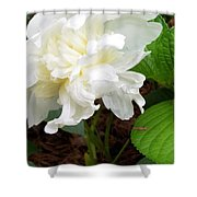 White Peonia Shower Curtain