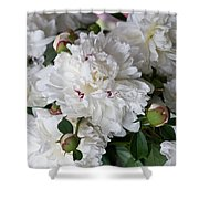 White Peony With Red Traces Shower Curtain