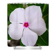 White Periwinkle Flower 1 Shower Curtain
