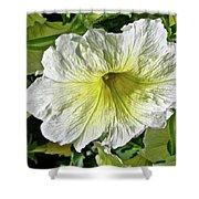 White Petunia - Solanaceae Shower Curtain