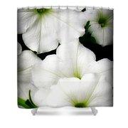 White Petunias 2 Shower Curtain