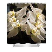 White Phalaenopsis Blossom Shower Curtain