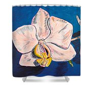 White Phalaenopsis Orchids Shower Curtain