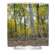 White Pine Hollow Shower Curtain