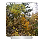 White Pine Hollow State Forest Shower Curtain