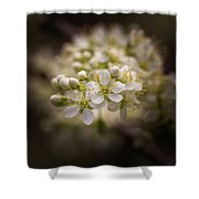 White Plum Blossom- 2 Shower Curtain