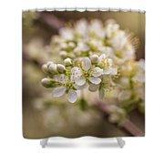 White Plum Blossom Shower Curtain