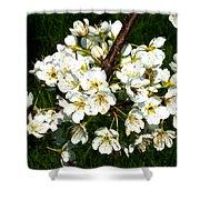 White Plum Blossoms Shower Curtain
