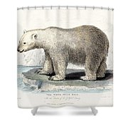 White Polar Bear On Ice Floe Shower Curtain