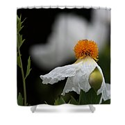 White Poppy  Shower Curtain