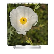 White Poppy With Buds Shower Curtain