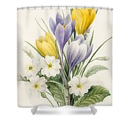 White Primroses And Early Hybrid Crocuses Shower Curtain