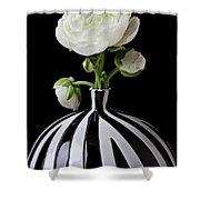 White Ranunculus In Black And White Vase Shower Curtain