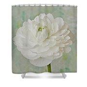 White Ranunculus Shower Curtain