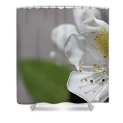 White Reaching Out 2 Shower Curtain