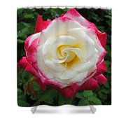 White Red Rose Shower Curtain
