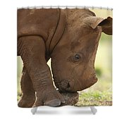 White Rhinoceros Ceratotherium Simum Shower Curtain by Matthias Breiter