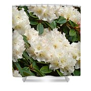 White Rhodies Landscape Floral Art Prints Canvas Baslee Troutman Shower Curtain