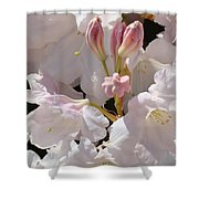 White Rhodies Pink Rhododendrons Flowers Art Prints Canvas Botanical Baslee Troutman Shower Curtain