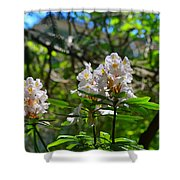 White Rhododendron Blooms Shower Curtain