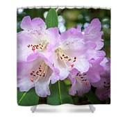 White Rhododendron Flowers With A Purple Fringe Shower Curtain