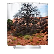 White Rim Overlook Trail Tree Shower Curtain