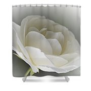 white Rose -1- Shower Curtain by Issabild -
