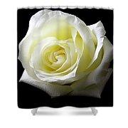 White Rose-11 Shower Curtain