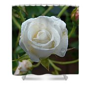White Rose After Rain 2 Shower Curtain