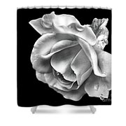 White Rose Aglow Shower Curtain