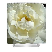 White Rose Art Prints Summer Sunlit Roses Baslee Troutman Shower Curtain