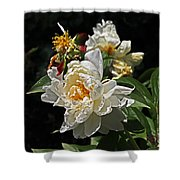 White Rose In Autumn Shower Curtain