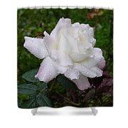 White Rose In Rain Shower Curtain