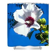 White Rose Of Sharon Hanging Out In The Sky Shower Curtain