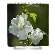 White Rose Of Sharon Squared Shower Curtain
