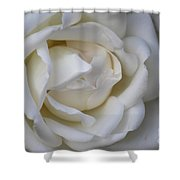 White Rose2 Shower Curtain