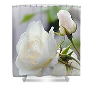 white Roses -2- Shower Curtain