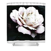 White Rose,stylization Shower Curtain