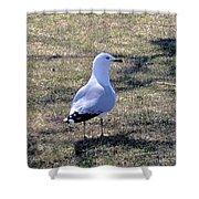 White Seagull Shower Curtain
