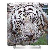 White Siberian Tiger Shower Curtain