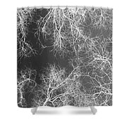 White Silhouetted Trees  Shower Curtain