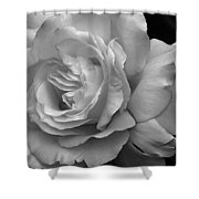 White Simplicity Rose Macro Shower Curtain
